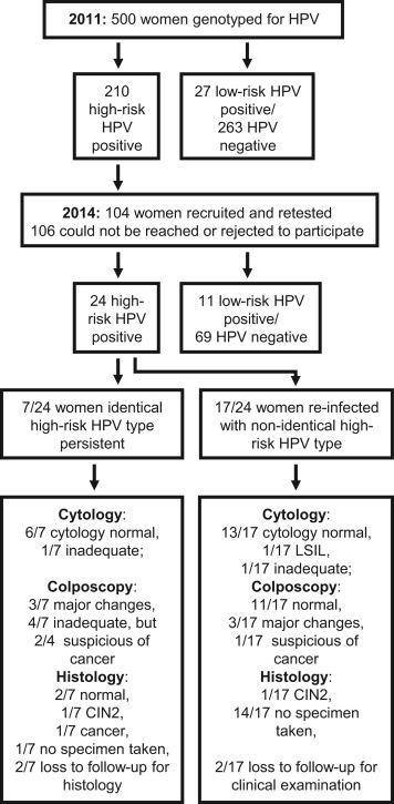 high risk hpv genotypes cancer