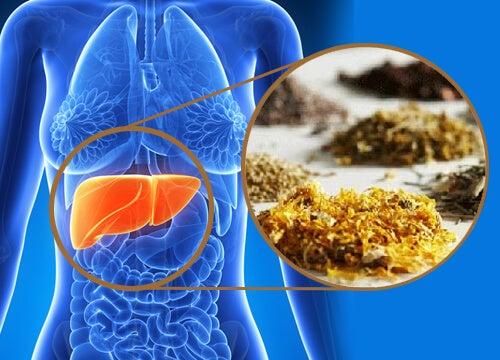 tratamentul negilor perineali laryngeal papilloma treatment