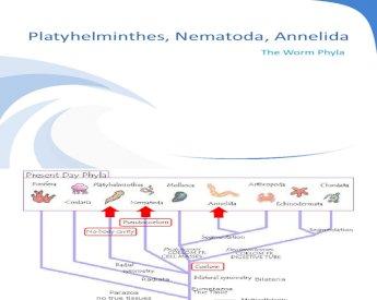 filo platyhelminthes și nematode helmintox pieaugusajiem