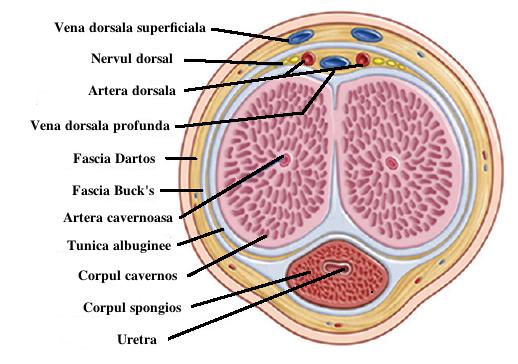 cauzele viermilor la adulți