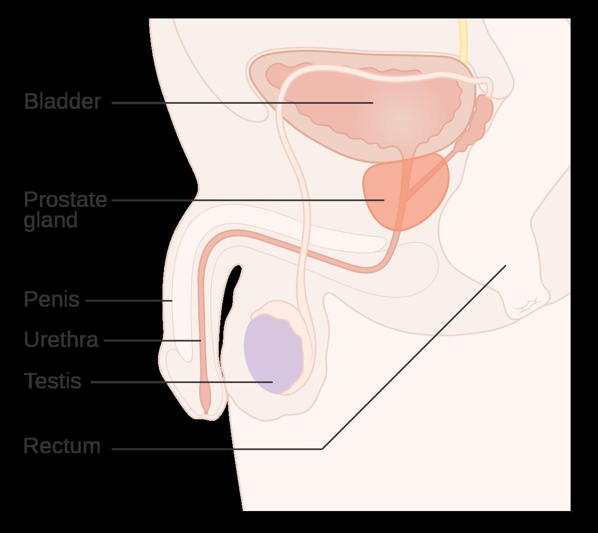 enterobius vermicularis infection