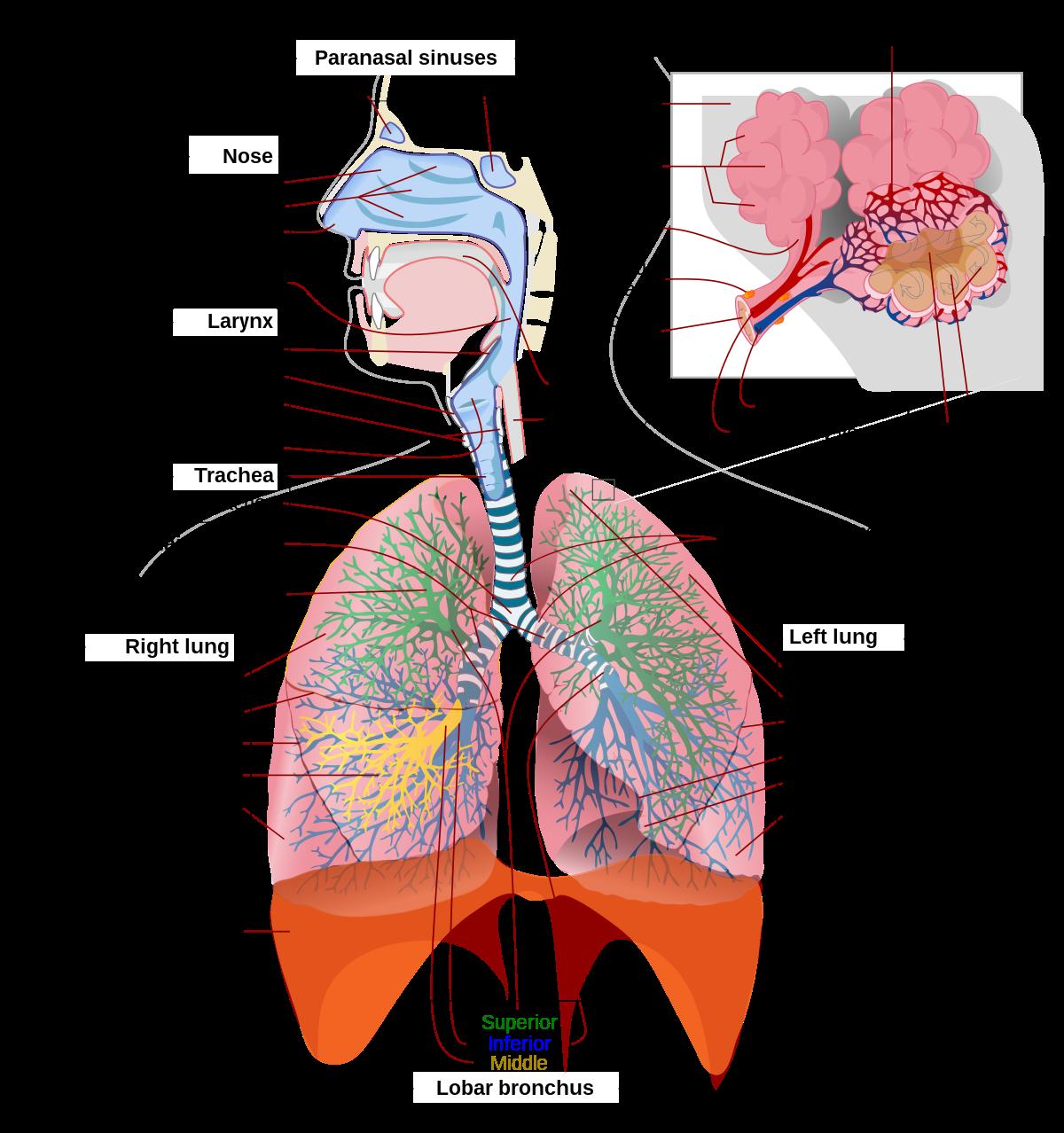 dureri abdominale după tratamentul cu viermi rotunzi împotriva viermilor la copii