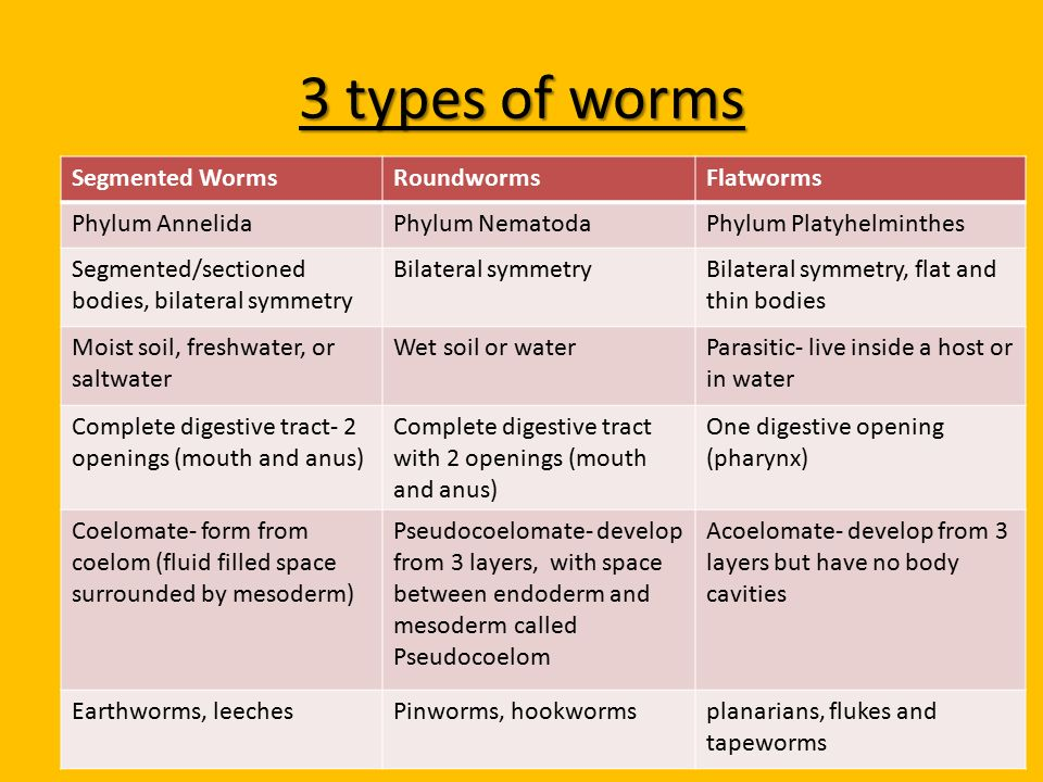 Platyhelminthes vs Nematoda