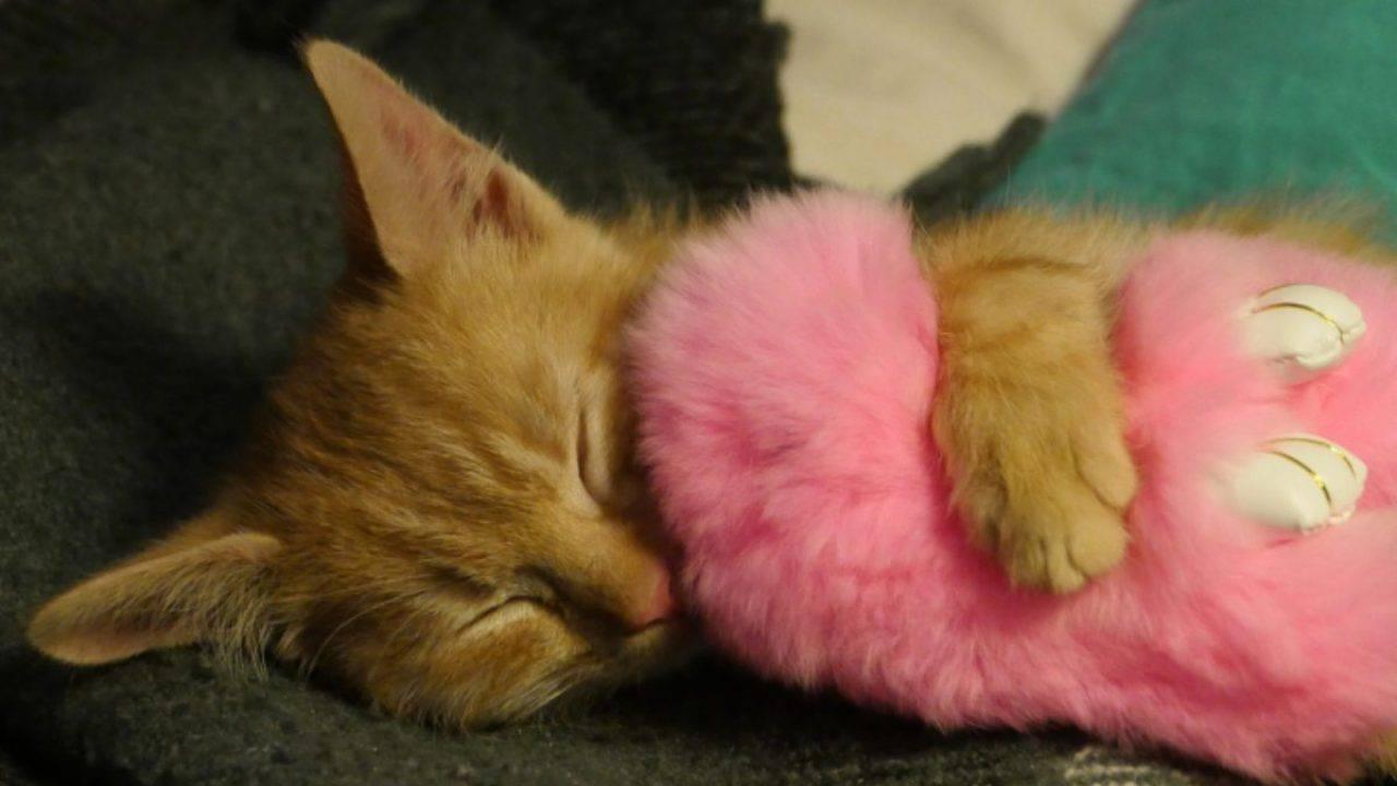 giardia gatto sintomi