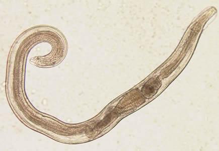 hpv virus gefahrlich papilloma la barbati
