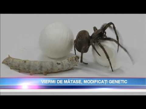 de ce sunt viermii periculoși pentru adulți?