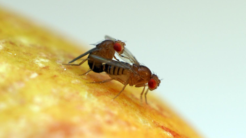 Ricerca papilloma virus nel maschio, Ricerca papilloma virus nel maschio