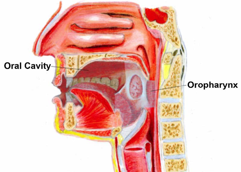 Hpv induced throat cancer, Can hpv virus cause throat cancer, Cura pt detoxifiere limfatica