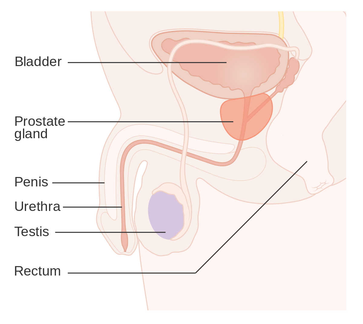 cancerul de prostata prognostic tratament pe ciclu de viață larg