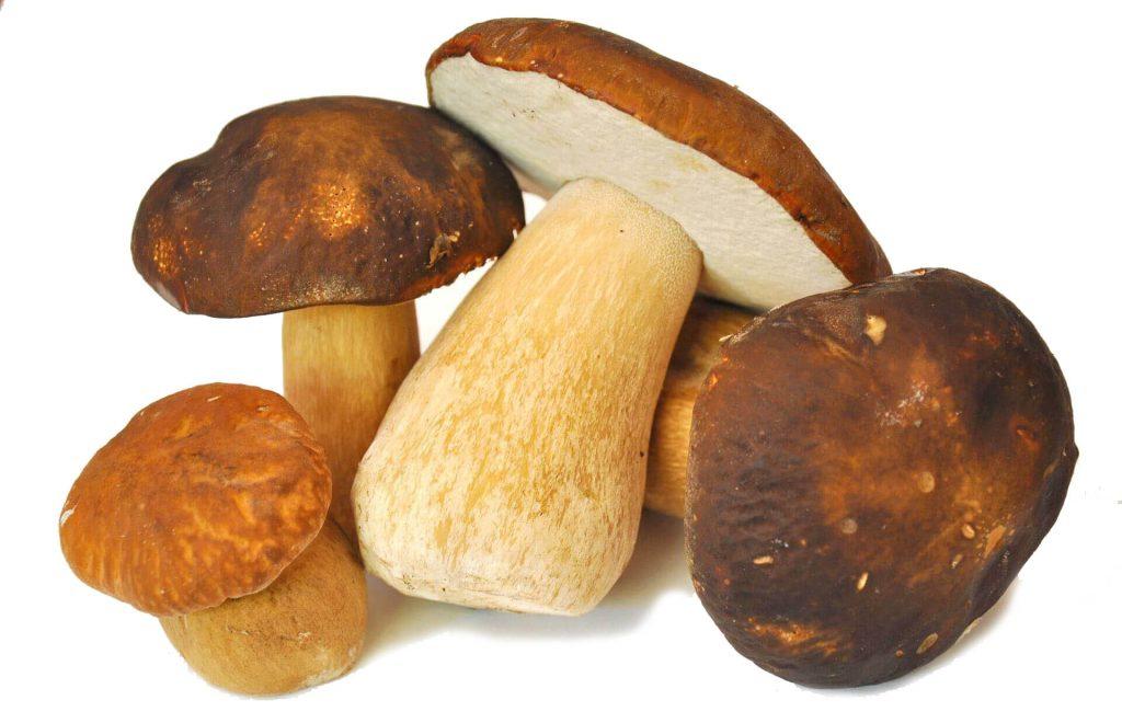 medicament pentru ciuperci de chanterelle pentru paraziți