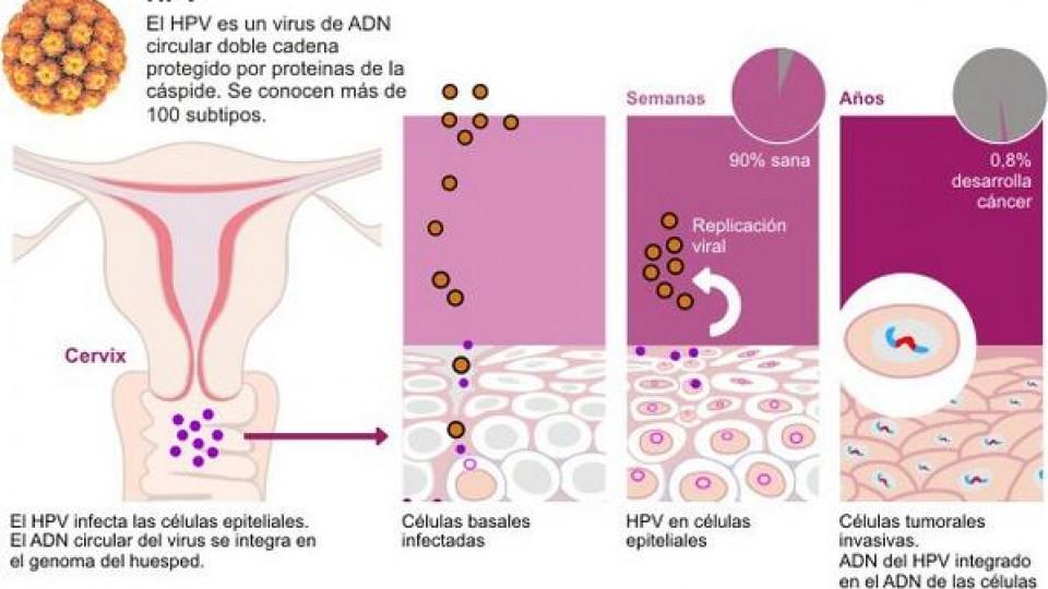 hpv virus herpes