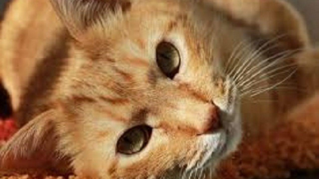 pisica pune viermi medicament helmintox
