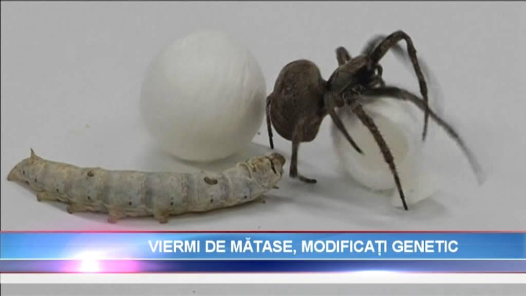 Tratament pentru oua de vierme uman