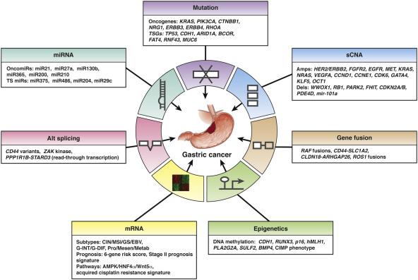 viburnum derivat din paraziți bacterie 36 weken zwanger