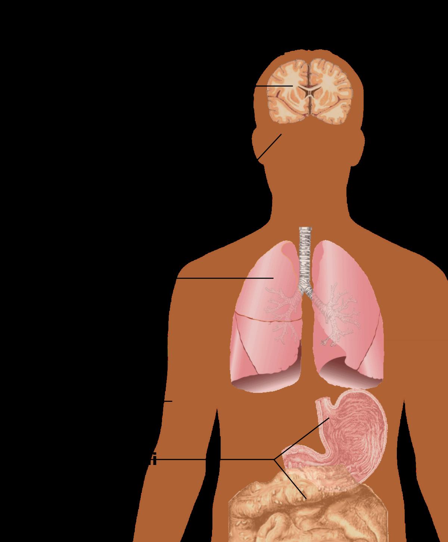human papilloma virus ansteckung