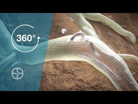tratamentul nematodelor și helmintelor la adulți