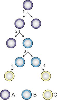 Celula parazit | Opinia studențească