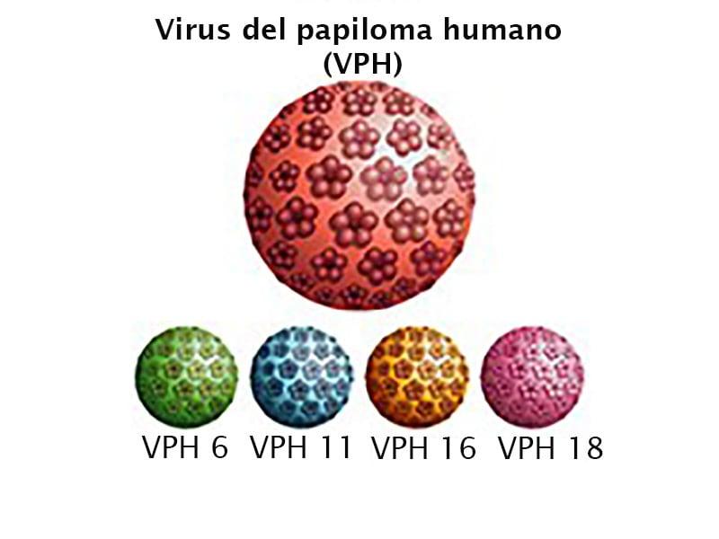 virus papiloma numero 16