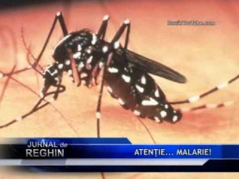Malarie - Wikipedia