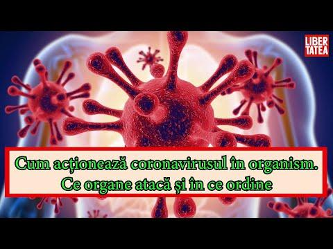 ordinea tratamentului paraziților corpului uman