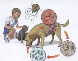 Paraziti la scaun