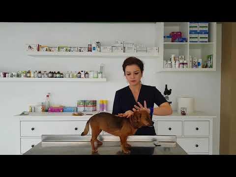 Advocate 4-8kg Pisica – 1 Pipeta