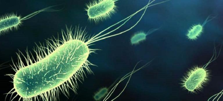 Bacterii nepatogen