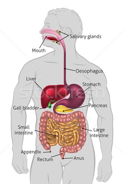condilom genital așa cum arată la bărbați papilloma vescicale cos e