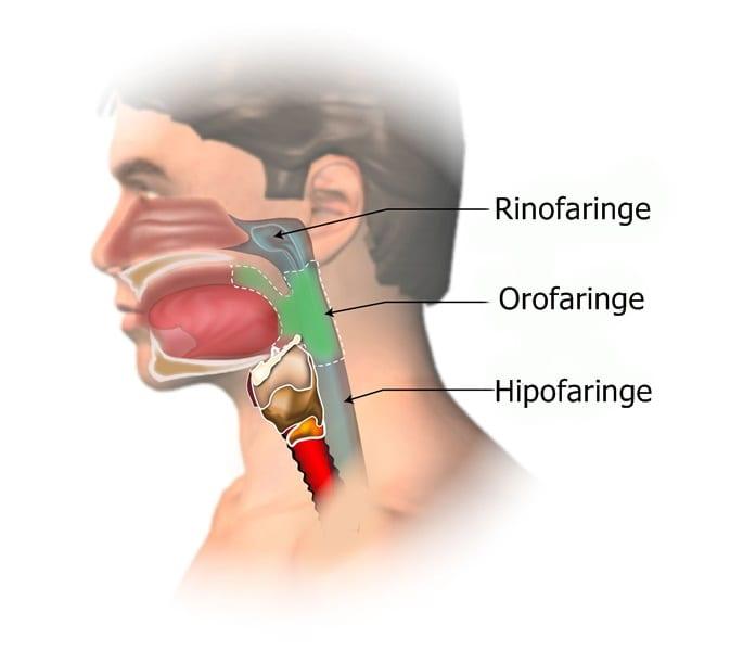 cancer laringian cauze tratamentul parazitului kruger