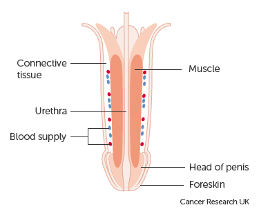 Cancer metastatic in bones. [The role of radiotherapy in the palliative treatment of cancer].