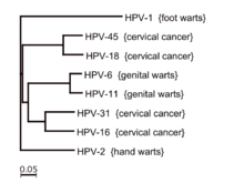 cancers caused by hpv 16