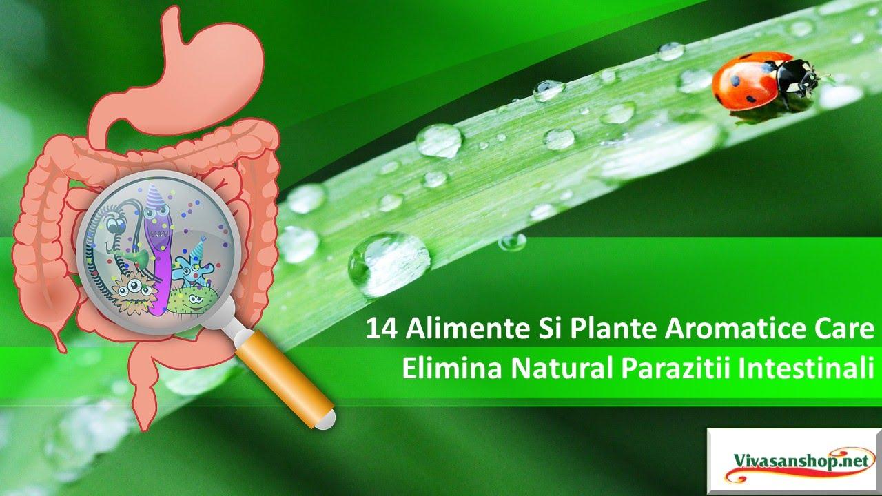 ce tablete pot elimina paraziții din organism