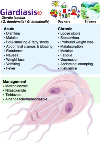 Enterobiasis differential diagnosis. Helminths. lamblia