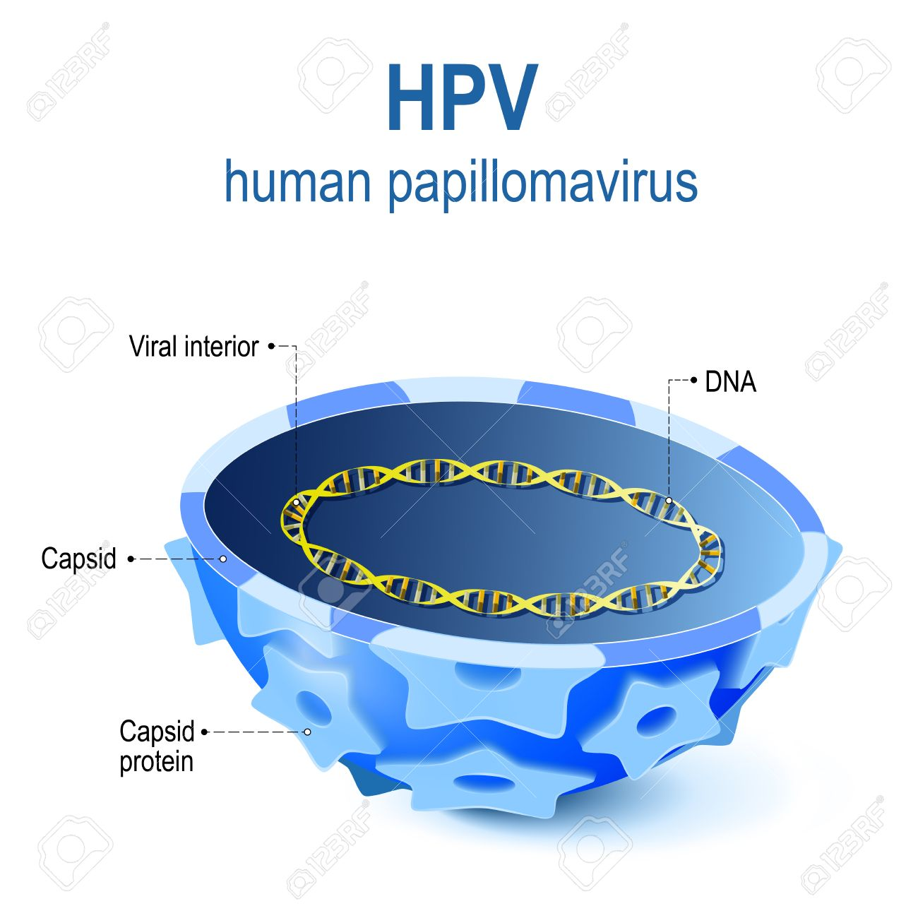 Human papillomavirus hpv high- risk types