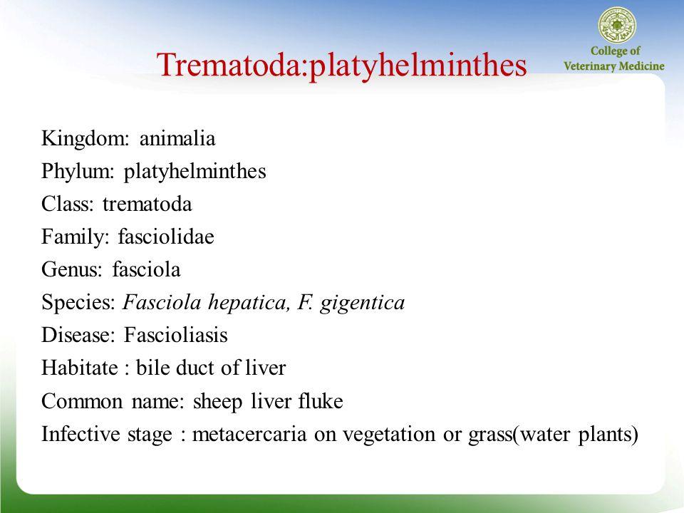 phylum platyhelminthes clasa trematoda