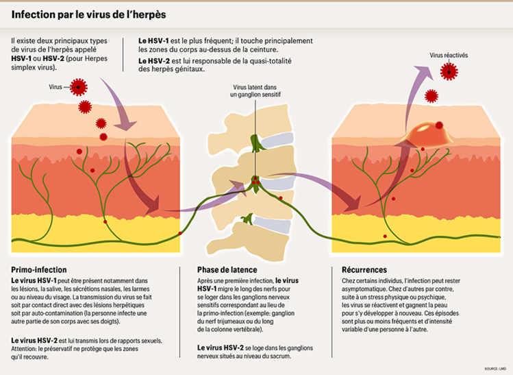 porteur sain du papillomavirus