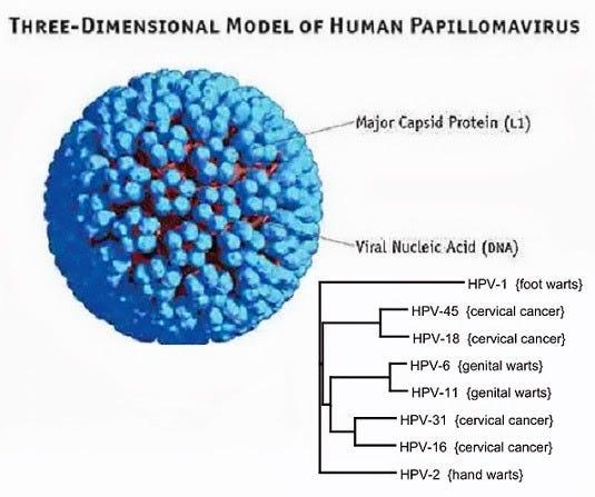 Penyebab human papilloma virus