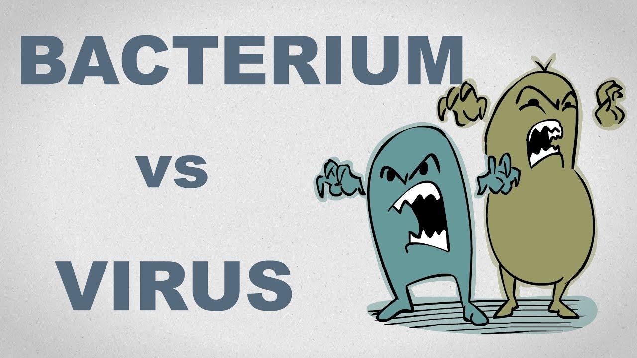 bacterii vs virusi