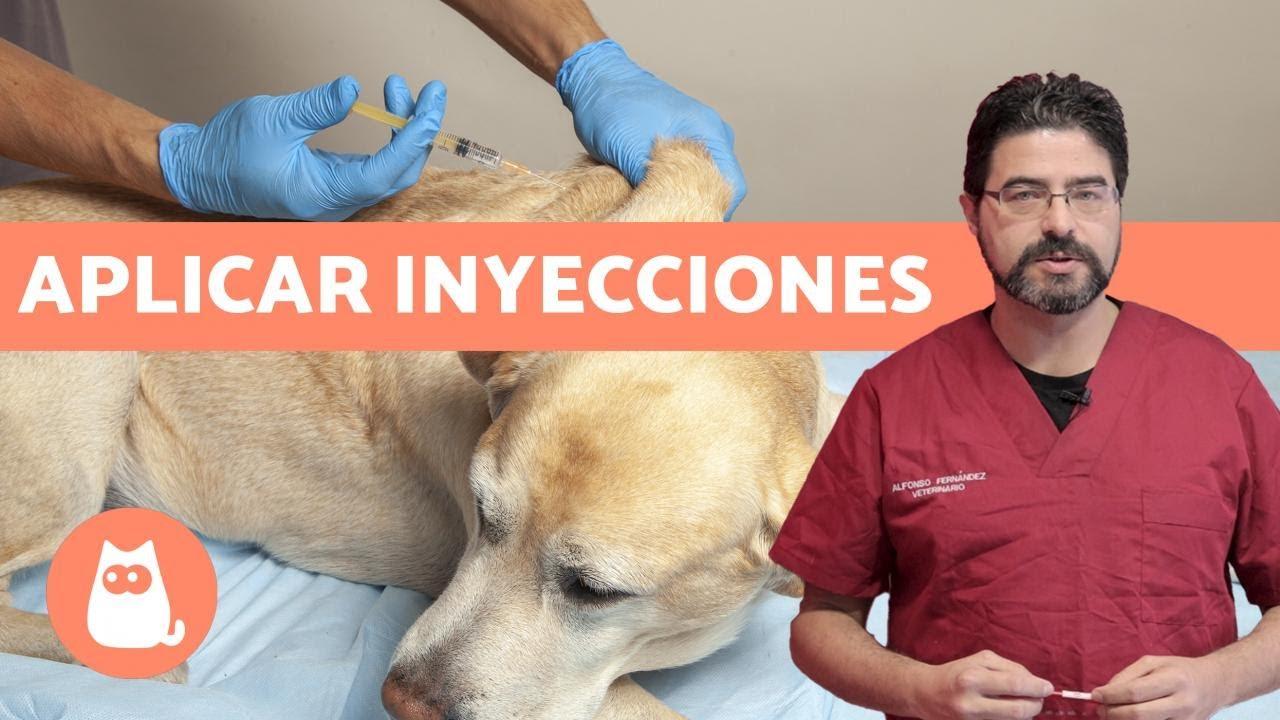 vacuna giardia și piele