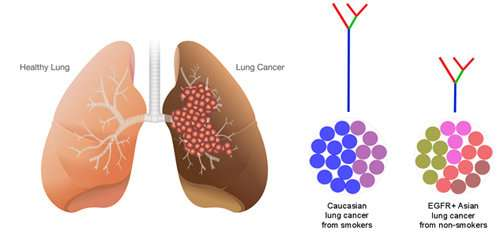 cancer genetic lung