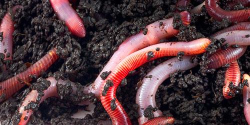 de ce papilom sub ochi organism simboliont și organism parazit