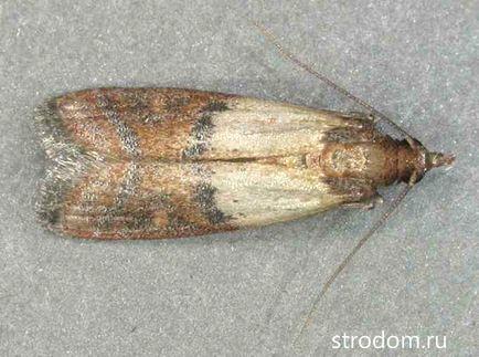 Cum scapi de larvele moliilor? - Specialistii