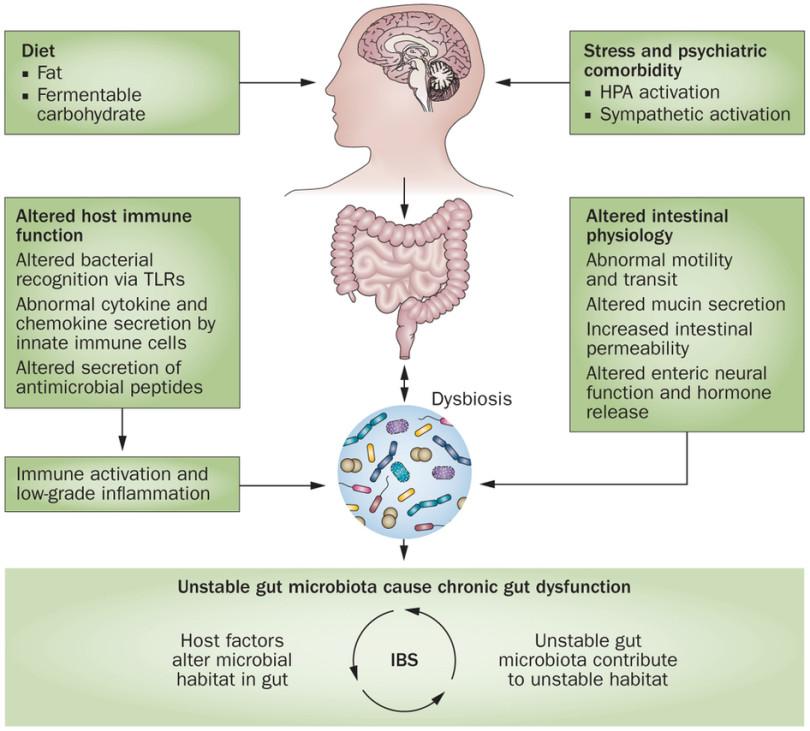 Dysbiosis of gut microbiota - Dysbiosis gut microbiota. REVISTA FARMACIA