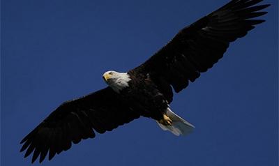 îndepărtați papilomii într un vultur