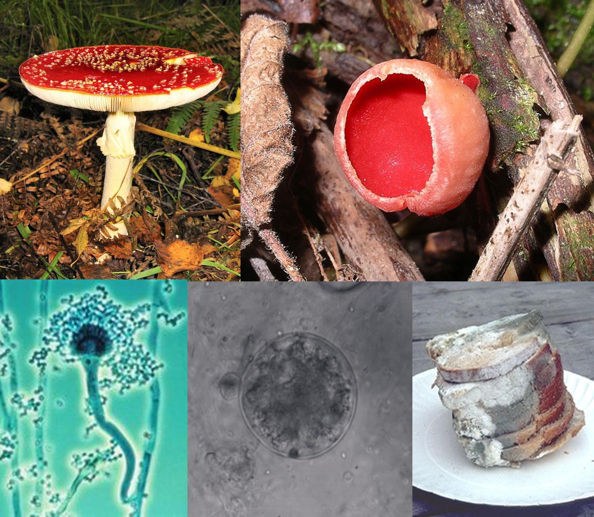 Remedii naturale pentru parazitii intestinali