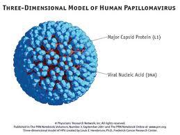 condiloame și micoplasme