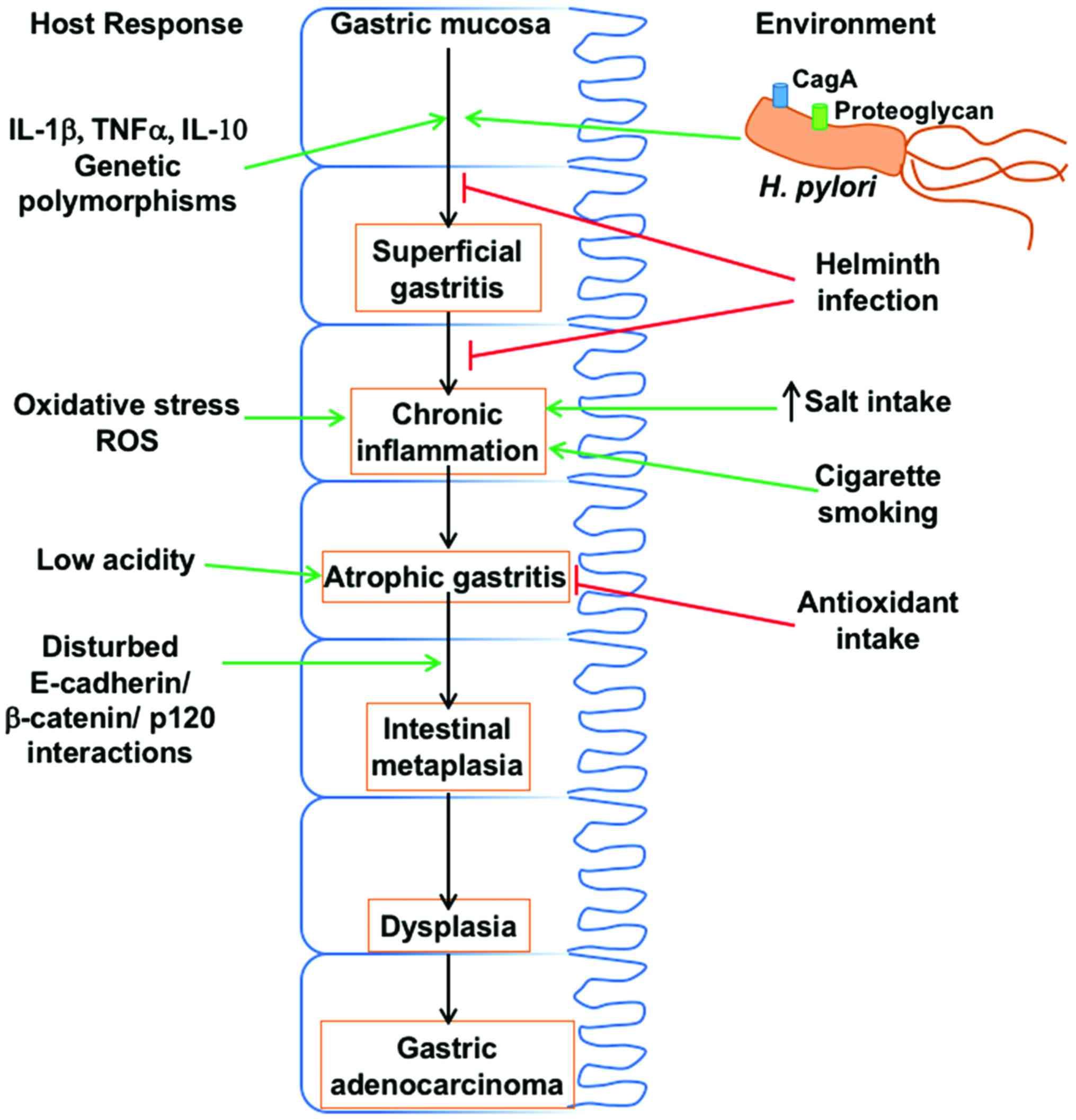 Endometrial cancer pembrolizumab. Helminths and immune modulation - Endometrial cancer pubmed