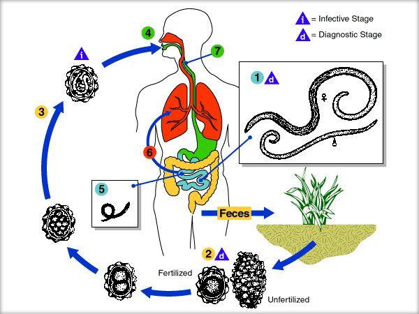 Varicele – metode naturale de tratare la indemana oricui