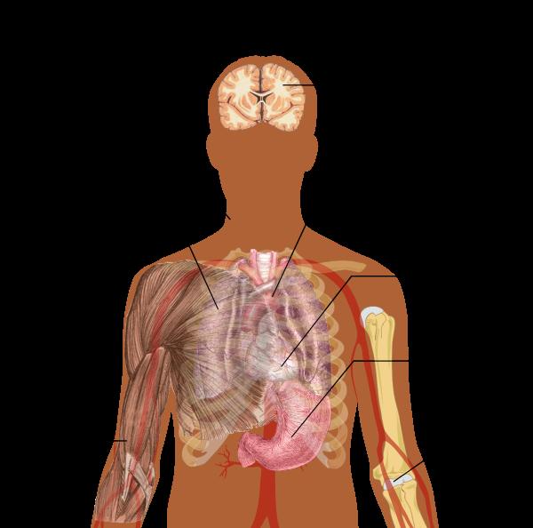 cancerul sistemului nervos diagnosticul și tratamentul viermilor la copii