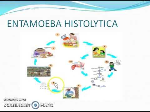 Oxiuros ciclo - Ciclo de vida de los parasitos oxiuros e gravidez